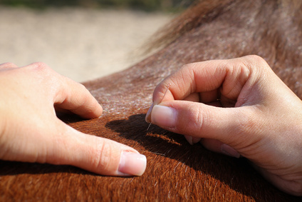 Akupunktur_für_Tiere_Tierheilpraxis