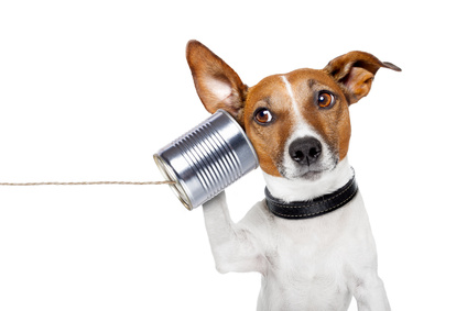Tierkommunikation_Tierheilpraxis